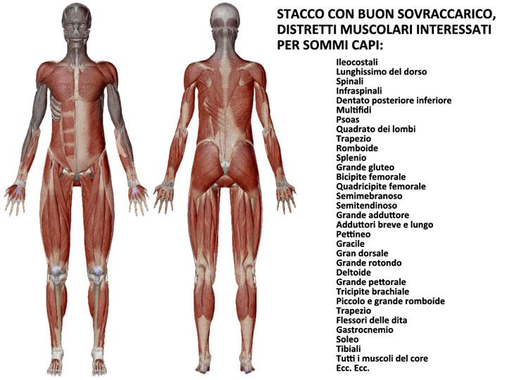 articolo_stacco_muscoli